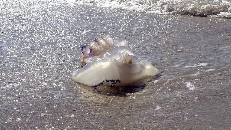 Un 95% de los Españoles prefiere el picor de las medusas a que le meen encima