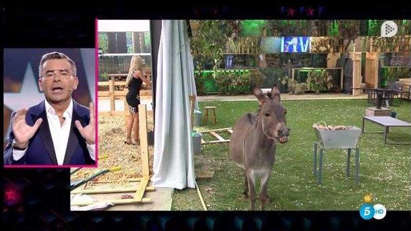Introducen un burro en GH VIP para subir la media de inteligencia de la casa