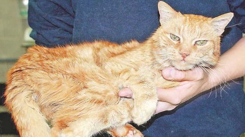 Un gatito morirá cada vez que alguien vote a Vox, según un estudio científico