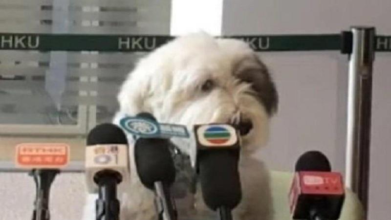 El Sindicato de Perros Unidos se declara en huelga por exceso de horas de calle