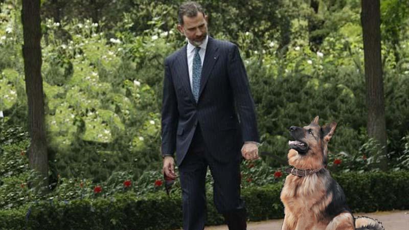 El Rey Felipe VI se compra un perro